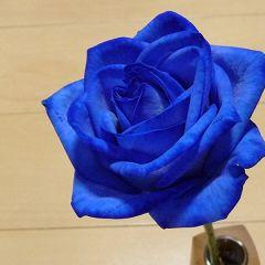 青いバラさん