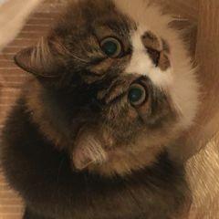 cattailさん