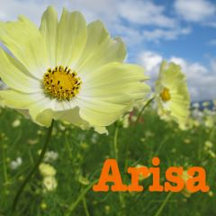 Arisaさん